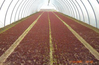 sperimentazioni agricole