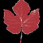 Agralia studio agronomico logo foglia